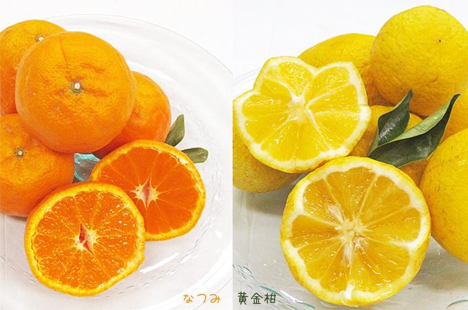 【家庭用】鶴田有機農園 初夏の柑橘4種詰め合わせ