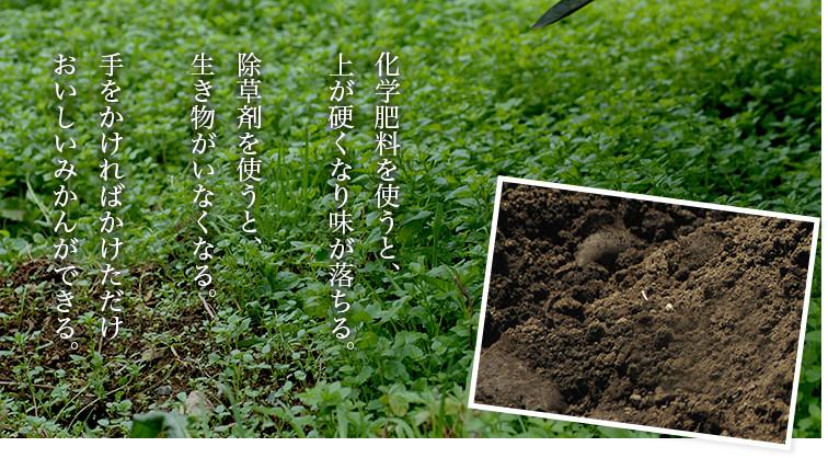 化学肥料を使うと、上が硬くなり味が落ちる。除草剤を使うと、生き物がいなくなる。手をかければかけただけおいしいみかんができる。