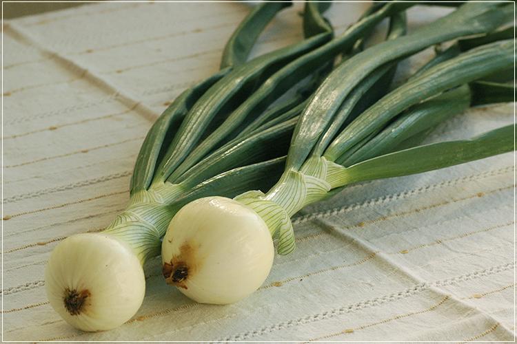 [有機栽培] 葉っぱつきサラダ玉ねぎ