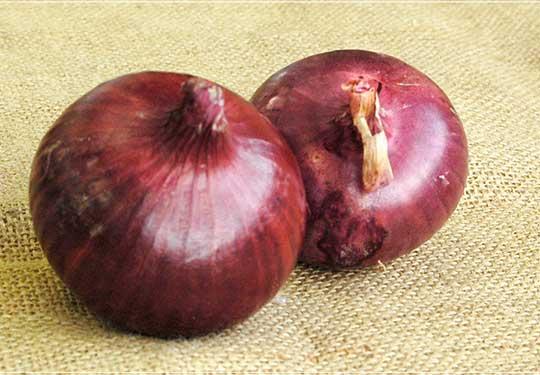 有機栽培赤玉ねぎ オーガニックレッドオニオン