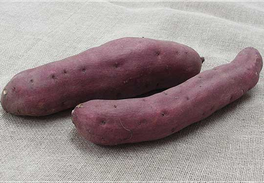 有機栽培サツマイモ