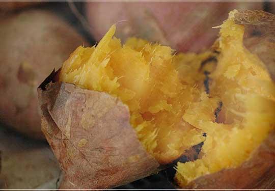 有機栽培(オーガニック) 安納芋