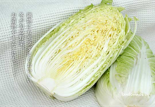 有機栽培白菜