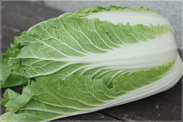 [有機栽培]ミニ白菜