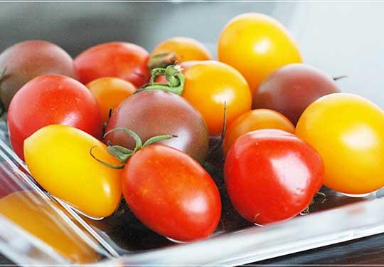 アイコ 有機栽培カラフルミニトマト