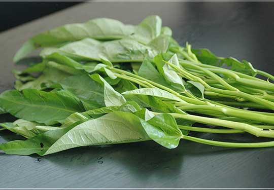有機栽培空芯菜