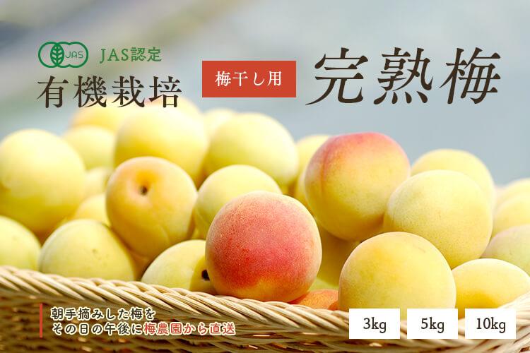[有機栽培] 熊代農園の完熟梅 (5kg)