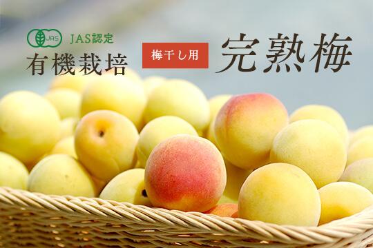 有機栽培完熟梅3Kg