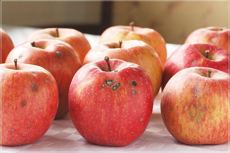 [有機栽培] ジュース用りんご (約8kg)