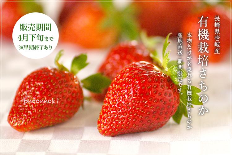 [有機栽培] 牧山さんの有機いちご (250g×4パック)
