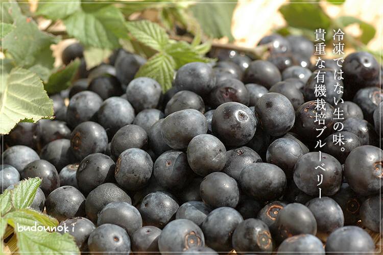 [有機栽培] ブルーベリー (100g)