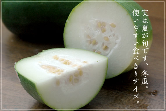 実は夏が旬です、冬瓜。使いやすい食べきりサイズ。 ミニ冬瓜有機JAS認定