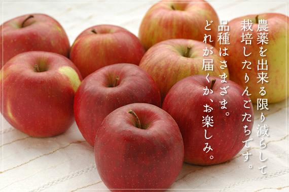 9月中旬から収穫が始まるりんごさんさ、つがる、シナノレッドの中からお届けします。 特別栽培りんご(早生種)