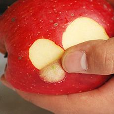 有機栽培無農薬ジュース用りんご