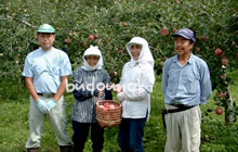 有機栽培りんご 三上さん