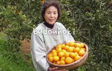 国産レモン 鶴田有機農園