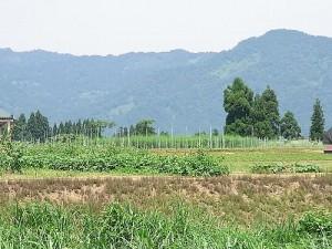 津南高原農産