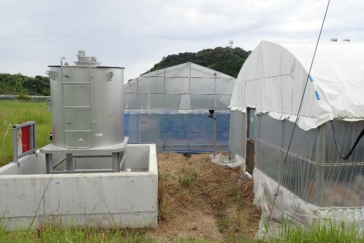 特別栽培愛媛県産レモン