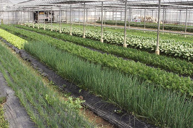 ヘルシーママSUNの畑
