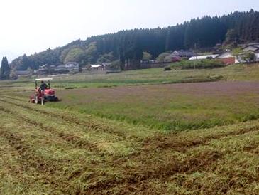 米の肥料に変わっていきます。