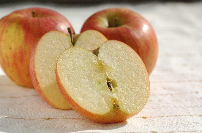 有機栽培訳りんご