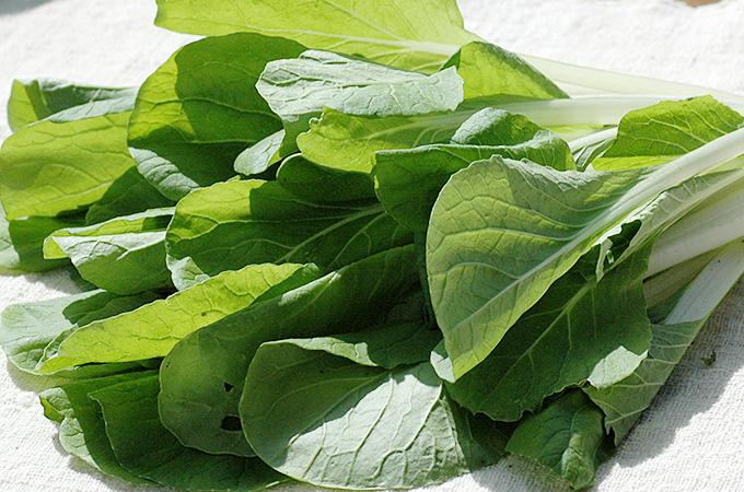 有機栽培(オーガニック)晩生菜(ばんせいな)の葉っぱ
