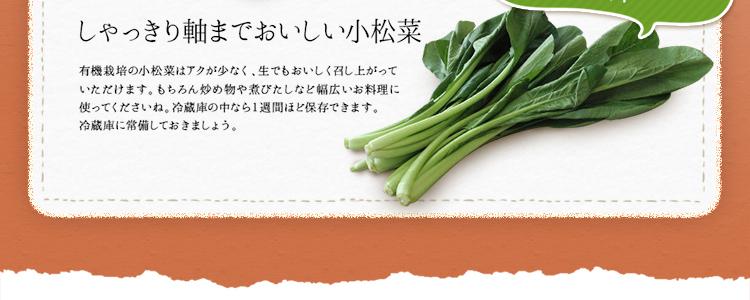 定番野菜3種類 しゃっきり軸まで美味しい小松菜