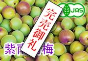有機栽培パープル南高梅