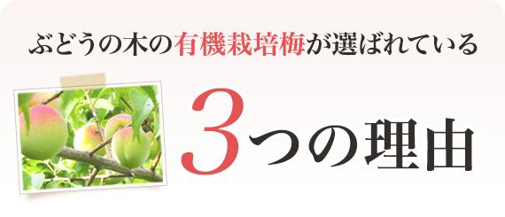 ぶどうの木の有機栽培梅が選ばれている 3つの理由