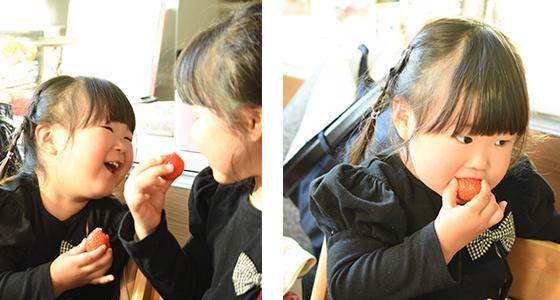 有機いちごを食べる子供の画像
