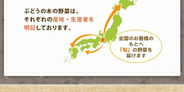 ぶどうの木の野菜は、それぞれの産地・生産者を明記しております。