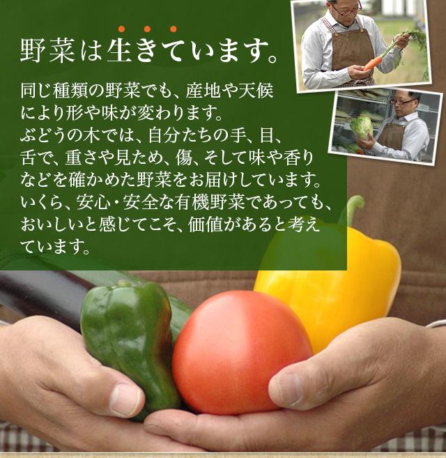 野菜は生きています